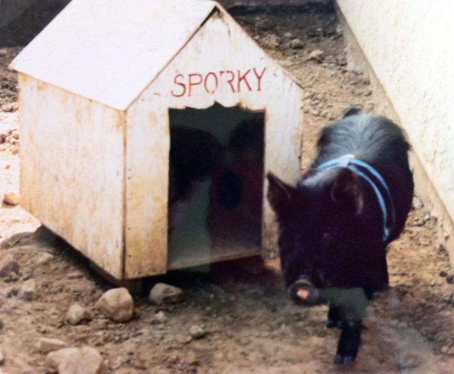 spork-walks-by-pig-house