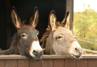 In ancient Sumerian, the relationship between mother and donkey is clear - both are beasts of burden.